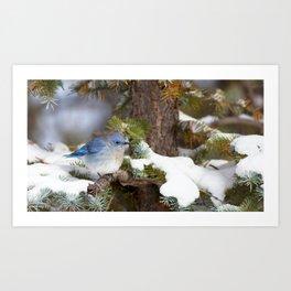 Watercolor Bird, Mountain Bluebird 10, Estes Park, Colorado, Enchanted Forest Art Print