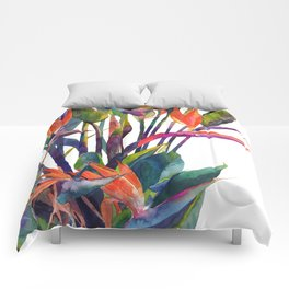 The bird of paradise Comforters