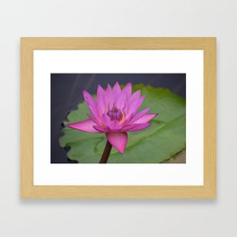 Bright Pink Water Lily Framed Art Print