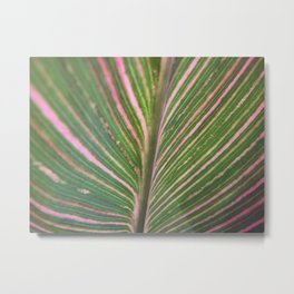 Close Canna Metal Print