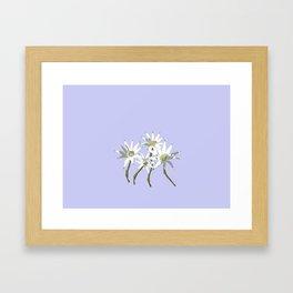 Flannel Flowers Actinotus helianthi Framed Art Print