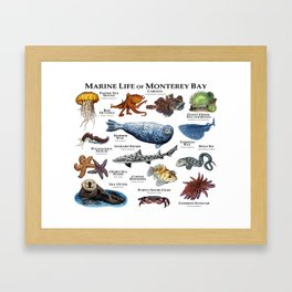 Marine Life of Monterey Bay Framed Art Print