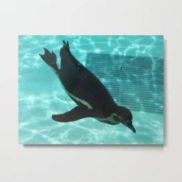Diving Penguin Metal Print
