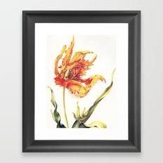 V. Vintage Flowers Botanical Print by Anna Maria Sibylla Merian - Parrot Tulip Framed Art Print