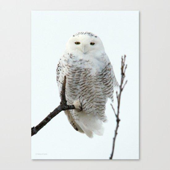 Snowy in the Wind (Snowy Owl) Canvas Print