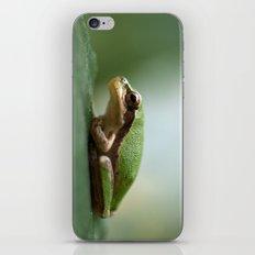 Mediterranean Tree Frog - Hyla meridionalis 8203 iPhone & iPod Skin