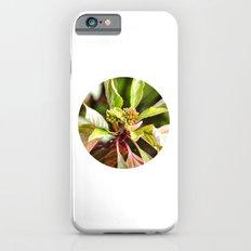Birth Slim Case iPhone 6s