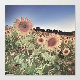 """Sunflowers"" Vintage summer.... Canvas Print"