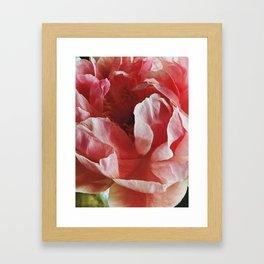 Peach Peony II Framed Art Print