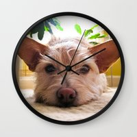 custom Wall Clocks featuring Custom Order by Canis Picta