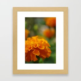 Sunshine on a rainy day#1 Framed Art Print