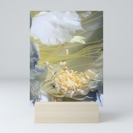 Cactus Flower - Fluff N Stuff Mini Art Print