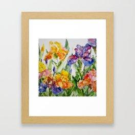 Multicolored iris Framed Art Print