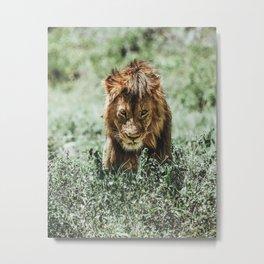 Ngorongoro Crater, Tanzania XII Metal Print
