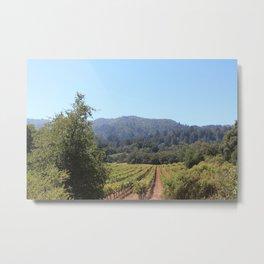 Vineyards, California Metal Print