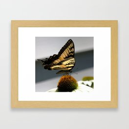Swallowtail Butterfly on Echinacea Cone Flower Framed Art Print