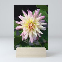 Dahlia Darling Mini Art Print