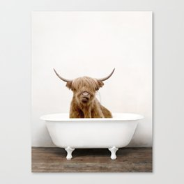 Highland Cow Bath (c) Canvas Print