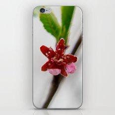 Red peach blossom iPhone Skin
