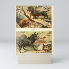 Vintage Print - Book of Dogs (1919) - Dachsund; Belgian Schipperke Mini Art Print