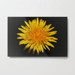 Dandelion Flower Metal Print