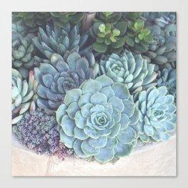 Succulent Container Canvas Print