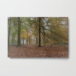 Amongst the Beech Trees Metal Print