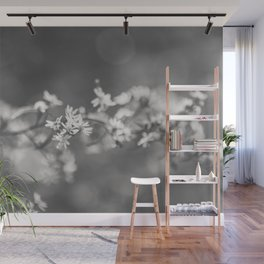 Asters Aglow - Flower Photography Wall Mural