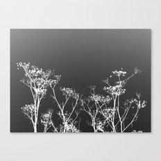 Night Sky in Reverse Canvas Print