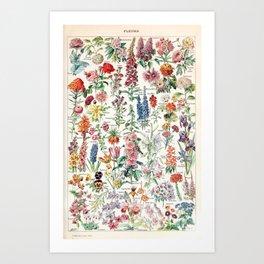 Adolphe Millot - Fleurs pour tous - French vintage poster Kunstdrucke