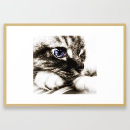 Hello there, Blue Eyes.. Framed Art Print