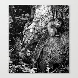 The Squirrel and the Tree King Canvas Print