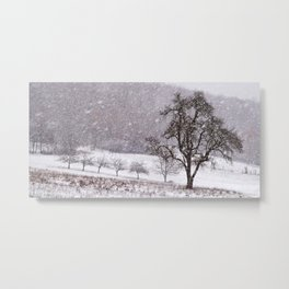 Old pear tree on a wintery meadow Metal Print