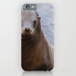 Portrait of a Sea Lion iPhone Case