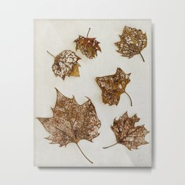 leaf skeletons Metal Print