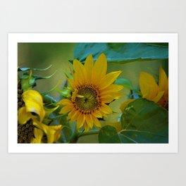 Sunflower Solar System Art Print