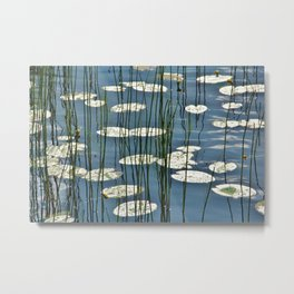 Yellow waterlily Metal Print