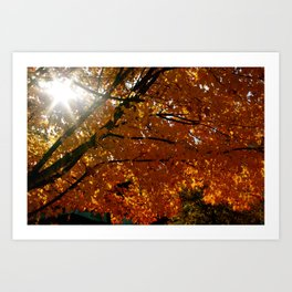 Season On Fire  Art Print