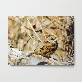 Finch in the fall Metal Print