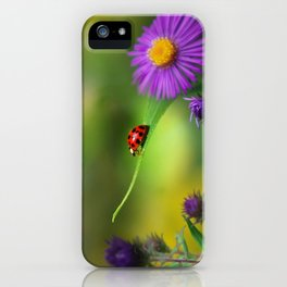 Ladybug In Search iPhone Case