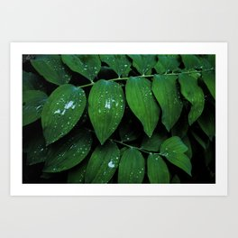 Solomon Seal Leaf Texture, Botanical Print, Nature Art Art Print