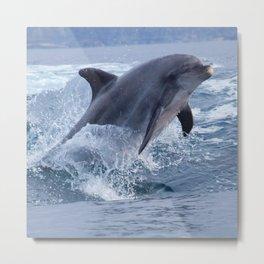 Bottenose dolphin Metal Print