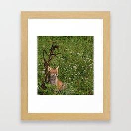 Relaxing Tod Framed Art Print