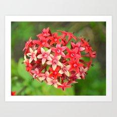 Blooming Heart ~ In Memory of Mackenzie Art Print