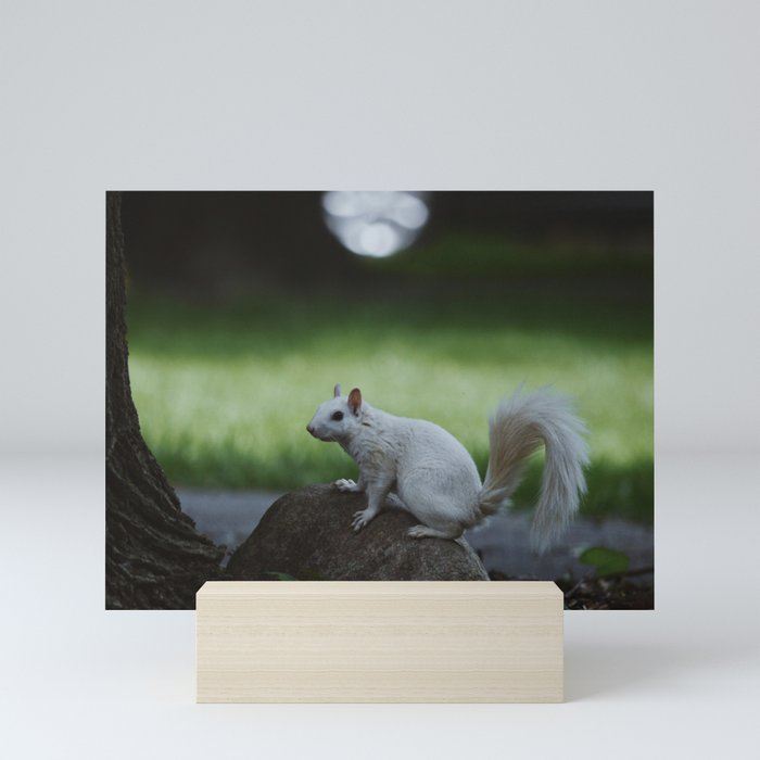Albino Squirrel Mini Art Print