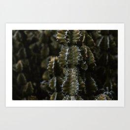 Botanical garden - Green cactus - Lanzarote, Canary island (Garden Cactus) - Fine art travel photography  Art Print
