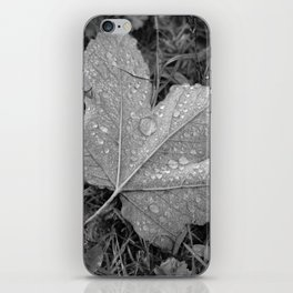 Water drops on leaf maple, black and white photo iPhone Skin