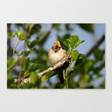 Singing swallow Canvas Print