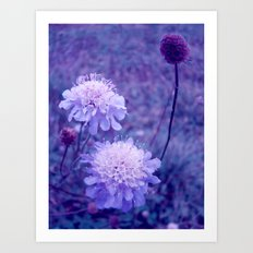 Meadow of Dreams Art Print