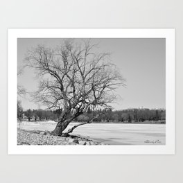 By The Frozen Pond Art Print